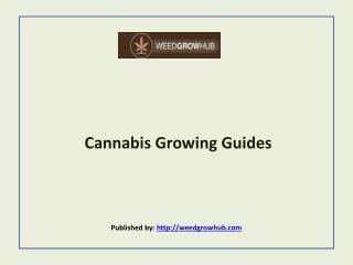 Weed Grow Hub