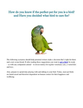 How do you know if the perfect pet for you is a bird?