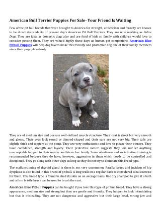 American Bull Terrier Puppies For Sale- Your Friend Is Waiting