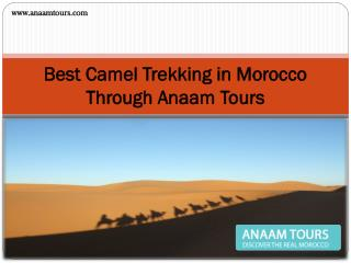 Best Camel Trekking in Morocco Through Anaam Tours