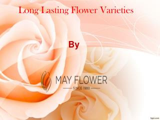 Long lasting flower varieties