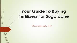 Your Guide To Buying Fertilizers For Sugarcane