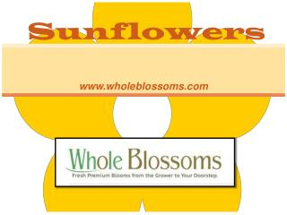 Wholesale Sunflowers - www.wholeblossoms.com