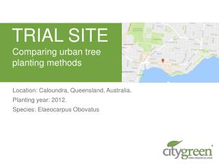 Comparing Urban Tree Planting Methods