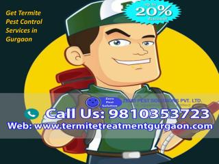 Get Termite Pest Control Services in Gurgaon Call Us at  91 9810353723
