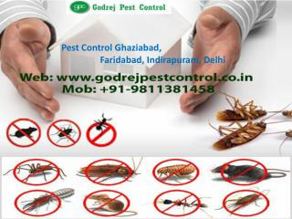 Best Termite Treatment Ghaziabad by Godrej Pest Control