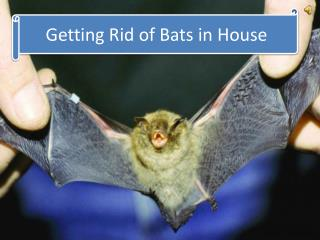 Getting Rid of Bats in House