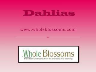 Buy Dahlia Flowers Online - www.wholeblossoms.com