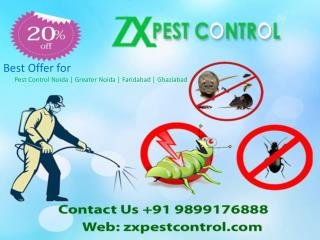 Best Offer- Pest Control Noida Call us 9899176888