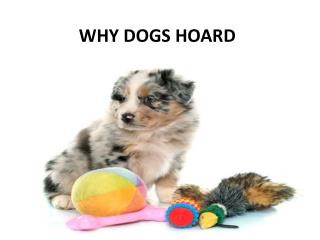 Why Dogs Horad