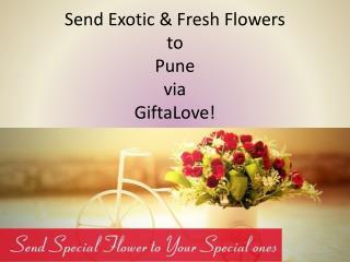 Send Exotic & Fresh Flowers to Pune via GiftaLove!