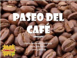 Paseo del Caf   anacafe