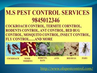 M S Pest Control Services in Bangalore