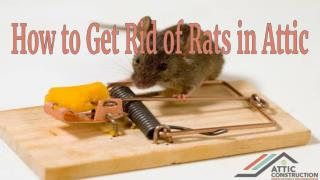 How to Make Home Rat Free - Rat Control Services