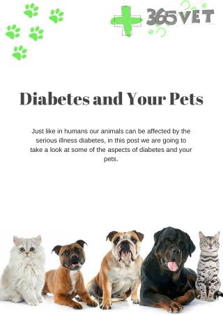 Diabetes and Your Pets