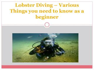 Lobster Diving � Various Things you need to know as a beginner