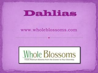 Discount Dahlia Flowers - www.wholeblossoms.com