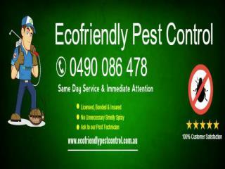 Ecofriendly Pest Control Perth