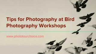 Tips for Photography at Bird Photography Workshops