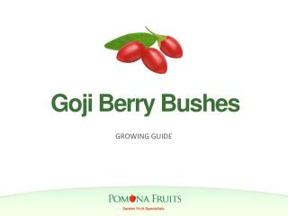 Goji Berry Bushes Growing Guide