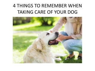 4 Things to Remember When Taking Care of Your Dog