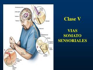 Clase V  VIAS  SOMATO SENSORIALES