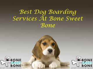 Best Dog Boarding Services At Bone Sweet Bone