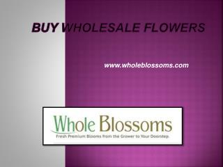 Buy Wholesale Flowers - www.wholeblossoms.com