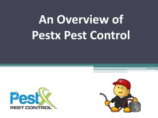 An Overview of Pestx Pest Control