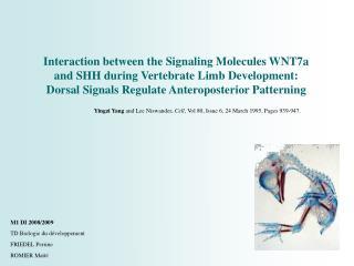 Interaction between the Signaling Molecules WNT7a and SHH during Vertebrate Limb Development: Dorsal Signals Regulate An