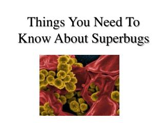 Things You Need To Know About Superbugs