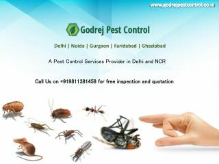 Contact Godrej Pest Control Indirapuram for quality pest control | Call on 9811381458