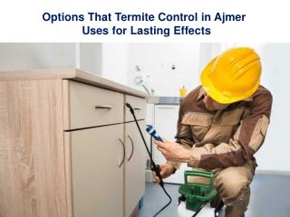 Options That Termite Control In Ajmer Uses For Lasting Effects