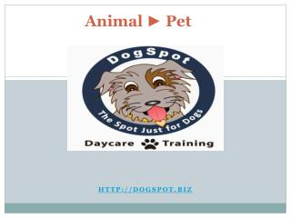 Canine Training San Marcos