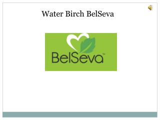 Water Birch on sale