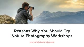 Reasons Why You Should Try Nature Photography Workshops