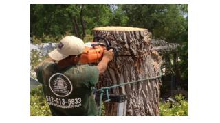 Stump Removal Austin TX