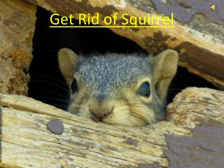 Get Rid of Squirrel