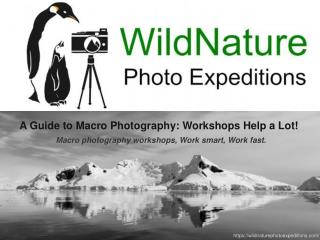 A Guide to Macro Photography: Workshops Help a Lot!