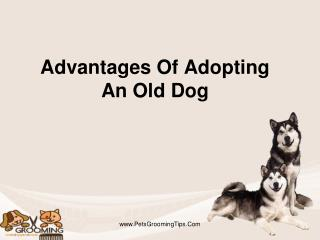 Advantages Of Adopting An Old Dog