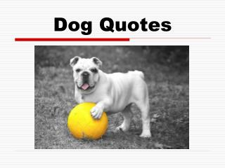 Dog Quotes For Every Dog Lover