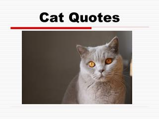 Cat Quotes For Every Cat Lover