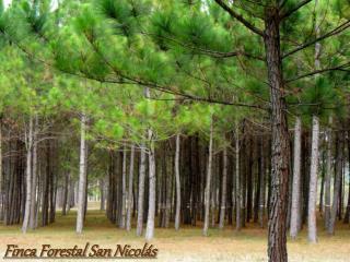 Finca Forestal San Nicol s