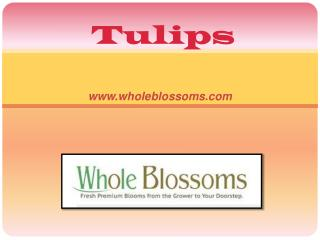 Bulk Parrot Tulip Flowers - www.wholeblossoms.com
