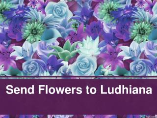 Send Flowers to Ludhiana