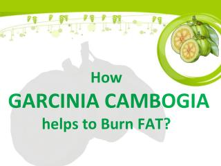 How Garcinia cambogia helps to Burn FAT - Garciniacambogiaonlinestore
