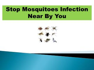 Stop Mosquitoes Infection Near By You
