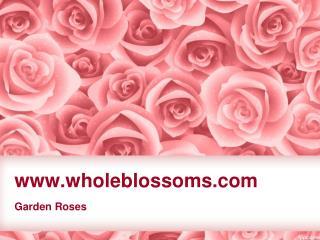 Bulk Garden Roses - www.wholeblossoms.com