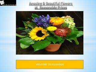Want to give a surprise to your special person? Then contact Oleander Floral Design.