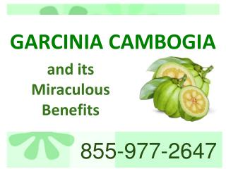 Garcinia Cambogia and its  Miraculous  Benefits  Garcinia cambogia online store.pdf